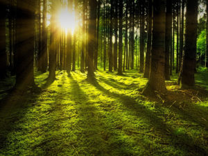 Rahvusvaheline metsapäev
